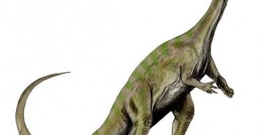 Massospondylus (ilustracja autorstwa Nobu Tamura na licencji GNU Free Documentation License